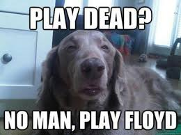 Stoner Dog Meme Generator - 139 best pink floyd funny images on pinterest music pink floyd