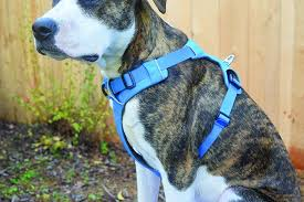 Comfortable Strap On Harness The 2017 Best Dog Harnesses Review Whole Dog Journal