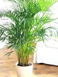 good low light plants best indoor plants low light best indoor plant indoor plant photo