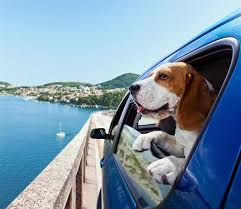 Wisconsin traveling with pets images Pets travel scheme taking your pet abroad brittany ferries jpg