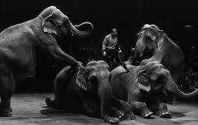 The Blind Men And The Elephant Lesson Plans Do Elephants Have Souls The New Atlantis