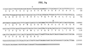 patent us6197310 causative agent of the mystery swine disease