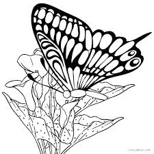 detailed butterfly coloring pages for adults butterfly coloring pages for adults butterfly life cycle coloring