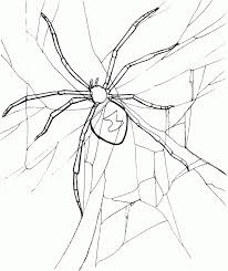printable spider coloring pages coloringstar