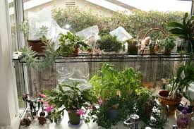 kitchen garden window garden windows for kitchens with earthy