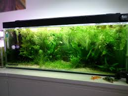 Inside Home Plants by Decoration Aquascaping Bring Nature Inside Home Ideas