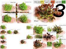 Tropical Aquatic Plants - live aquarium plants ebay