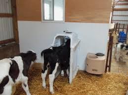 Calf Raising Barns About Us Id Tek Auto Calf Feeders
