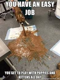 Vet Memes - fun with projectile vomiting randomness pinterest tech