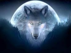 wolf moon on booksie