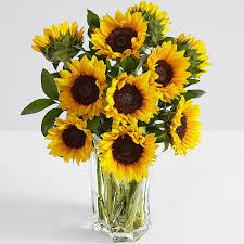 sunflower bouquets deluxe sunflower radiance
