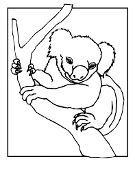 coloring pages koala bears coloring