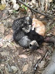 wild kittens in my garden cats