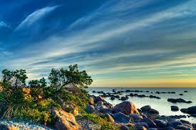 blue morning wallpapers beaches morning rock tree mood nature blue beach wallpaper