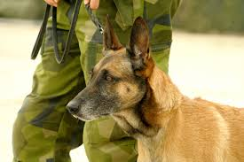 belgian sheepdog national specialty 2014 army career profile military working dog handler
