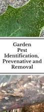 fall vegetable garden bugs best pest management images garden