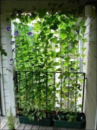 kletterpflanzen fã r balkon chestha idee treppe balkon