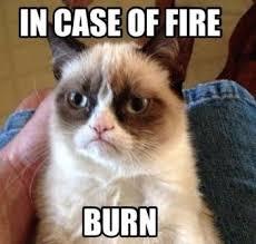 Grumpy Cat Monday Meme - laishi loweii images best funny grumpy cat meme hilarious pictures