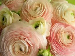 flowers nashville wholesale flowers and nashville wedding flowers import flowers