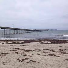 ocean beach san diego apartments for rent and rentals walk score