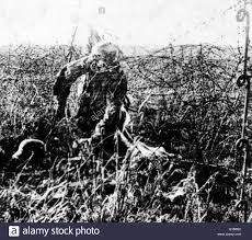 remains of dead world war i soldier hanging on barbed wire in remains of dead world war i soldier hanging on barbed wire in world war i
