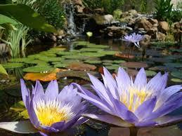 Diy Backyard Pond by 10 Best Build A Pond Images On Pinterest Backyard Ponds
