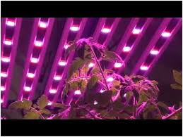 commercial led grow lights growing crops with led growing lights
