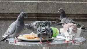 How To Get Rid Of Pigeons Off My Roof by Exeter Police Investigate Claims That Drunk Homeless People Are