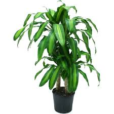 indoor plants that need little light live indoor plants