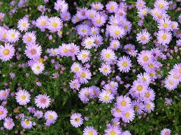 flower of the month flower blog
