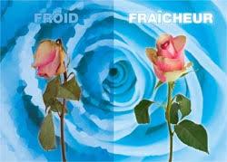 chambre froide fleuriste casaflor la conservation des fleurs en chambre climatique