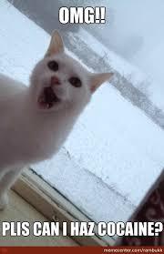 Cat Cocaine Meme - omg its snowing cocaine by rambukk meme center