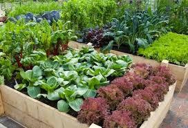 backyard raised garden ideas home improvement ideas
