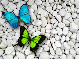 Blue And Green Butterfly - blue green butterfly wallpapers blue green butterfly stock