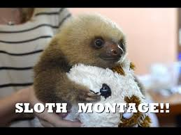 Memes Sloth - list of synonyms and antonyms of the word sloth fun