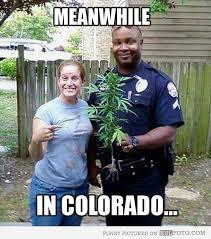 Funny Pot Memes - 708 best weed for depression images on pinterest