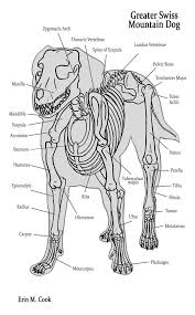 Dog Anatomy Heart Canine Muscle Structure Anatomy Of The Dog Dog Index Vet Tech