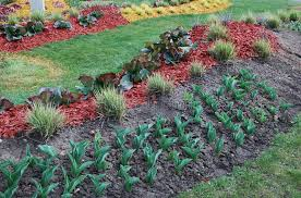 ornamental plants for landscaping stock photo image 70080439