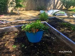 winter vegetable garden ramblings from a desert garden