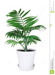 house plant pot 112 trendy interior or caring for indoor plants
