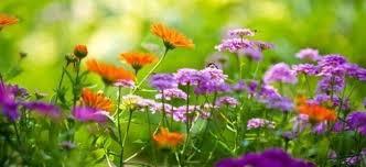 Summer Gardening - summer gardening tips what to do now in the garden cape contours