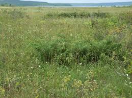 grassland native plants grassland u2013 botanicalartstalk