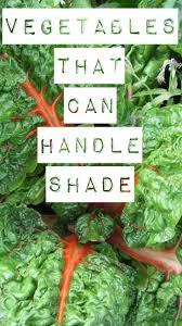 89 best vegetable gardening images on pinterest garden ideas