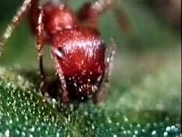 Backyard Science Dvd Ants Backyard Science Clip Youtube