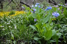 ohio native plants celebrating natives on earth day thinking outside the boxwood