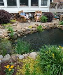 sc koi u0026 water garden society hortitopia