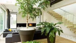 plants that grow in dark rooms the perfect plants for dim corners elengorn realtors