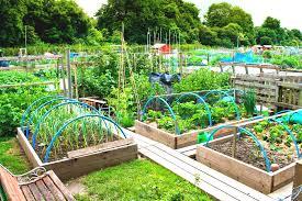 home garden design layout vegetable garden design layout new on modern plan cool layouts fun
