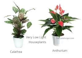 plants that need low light low light plants musicyou co