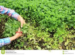 Best Vegetables For Small Garden by Vegetable Garden Plants Vidpedia Net Vidpedia Net